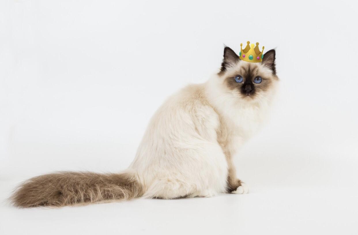 Choupette royal