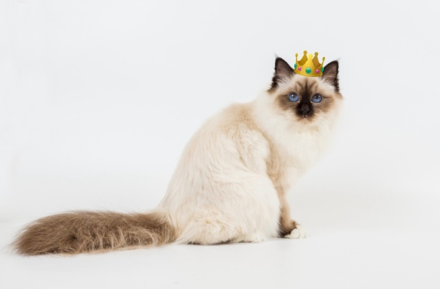 Choupette royal